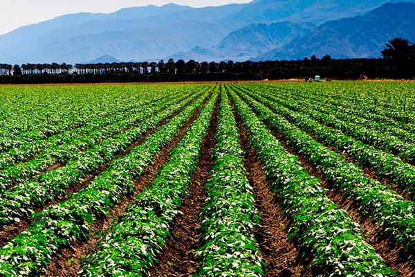 Una agricultura perfecta es la verdadera base del comercio y de la industria | Nutrivesa