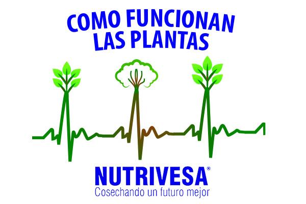 ¿Como funcionan las plantas? | Nutrivesa