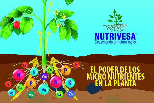 El poder de los Macro Nutrientes | Nutrivesa